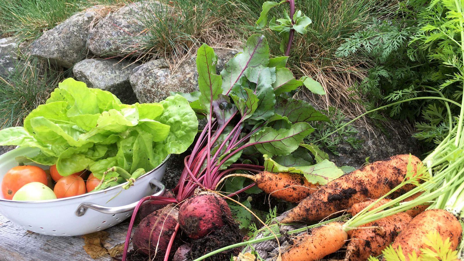 Grønnsaker dyrket økologisk i pallekarmer