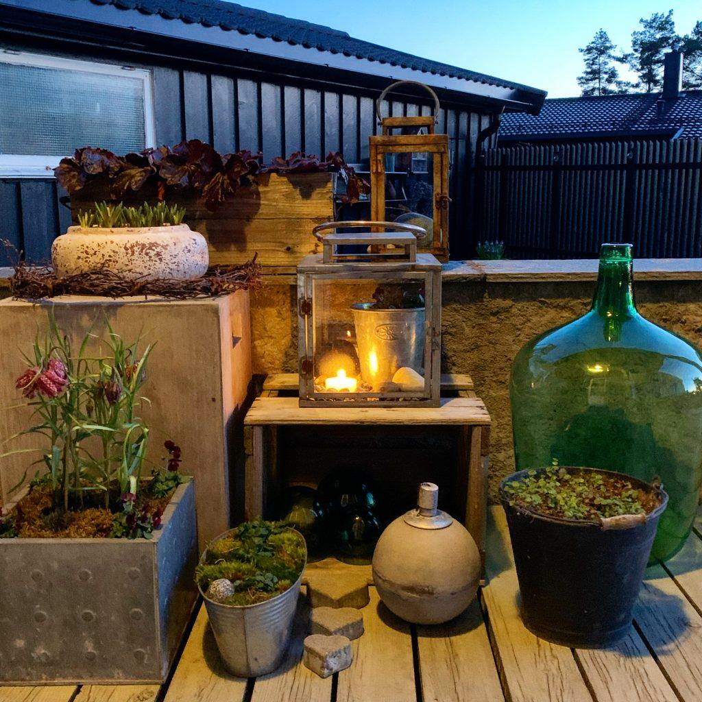 Mitt vårlige blomster-arrangement i kveldsstemning