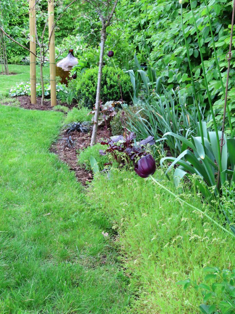 Tips til bunndekkere i hagen - Saxifraga