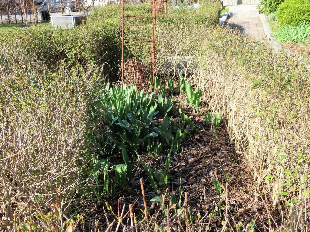 Det er vår i hagen - bli med en tur i forhagen Rektangulært bed hvor det spirer og gror