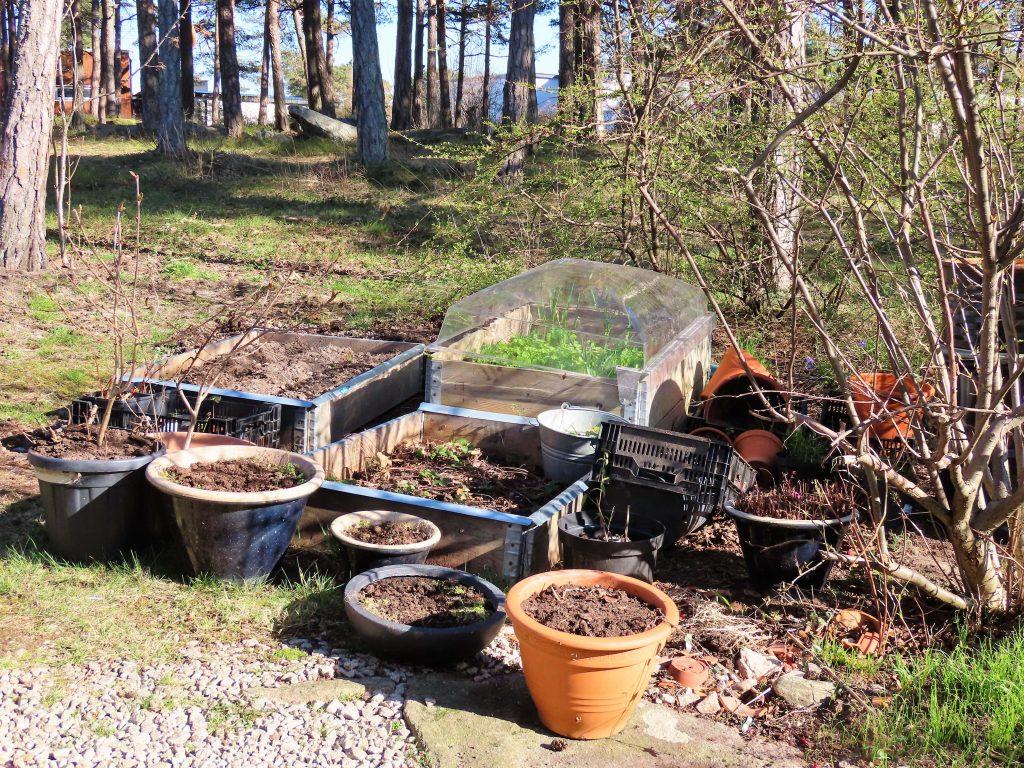 Vår i hagen - også bak i rufsehagen-stedet for venteplanter
