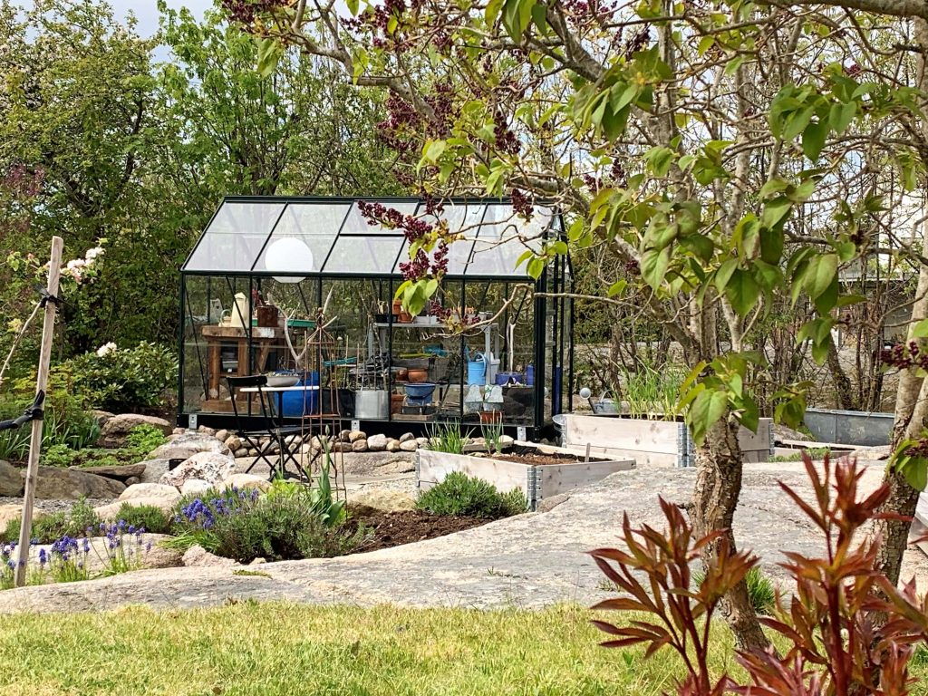 En hage med fjellknauser - Drivhuset med en herlig syrin i forgrunnen