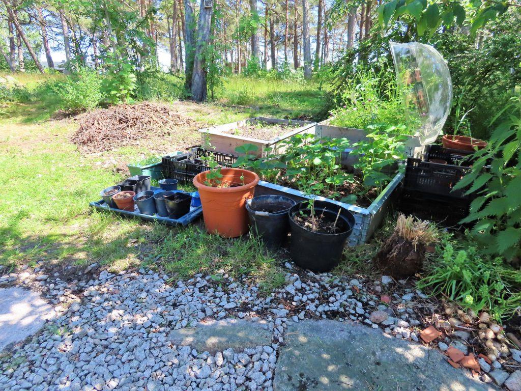 Praktisk kjøkkenhage i pallekarmer fylt med kompost - Klar til igangsetting