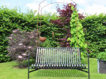 Svarthyll - Sambucus, et planteportrett og en teoppskrift - Her er deb i samplanting med flere busker og trær