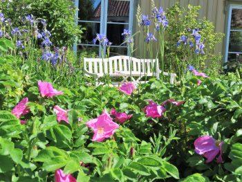 Forhagen med benk og herlige blomsterflor i Vaterland