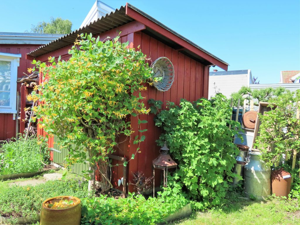 Når hagen preges av ditt kunstnersinn - utebod dekket av Kaprifolium