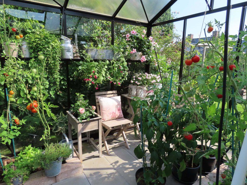 Inni drivhuset i hagen hos Wenche