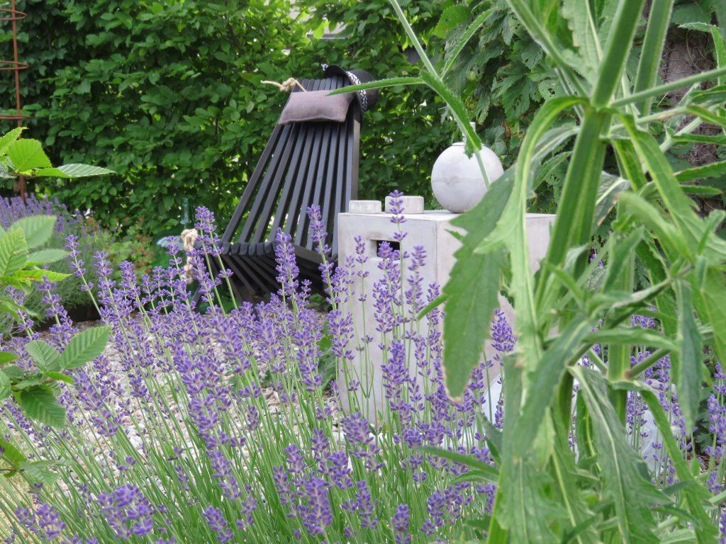 Ned med Lavendel opp med Kjempeverbena - er du klar. Lavendel i full blomst