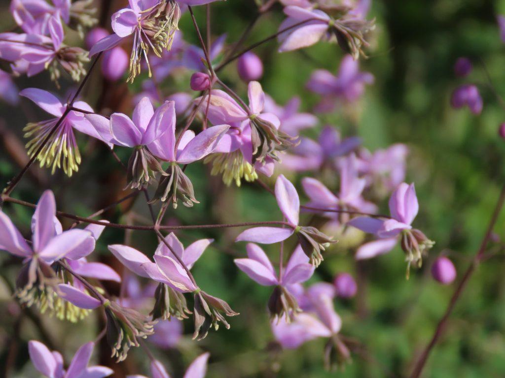 På hagevandring hos Wenche – til nytte og glede