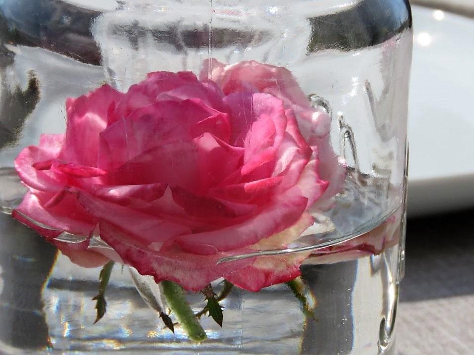 Nærbilde av rose i Norgesglass på bordet