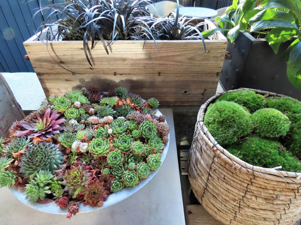 Blanding av grønnfarger, svart og burgunderrødt i stilleben