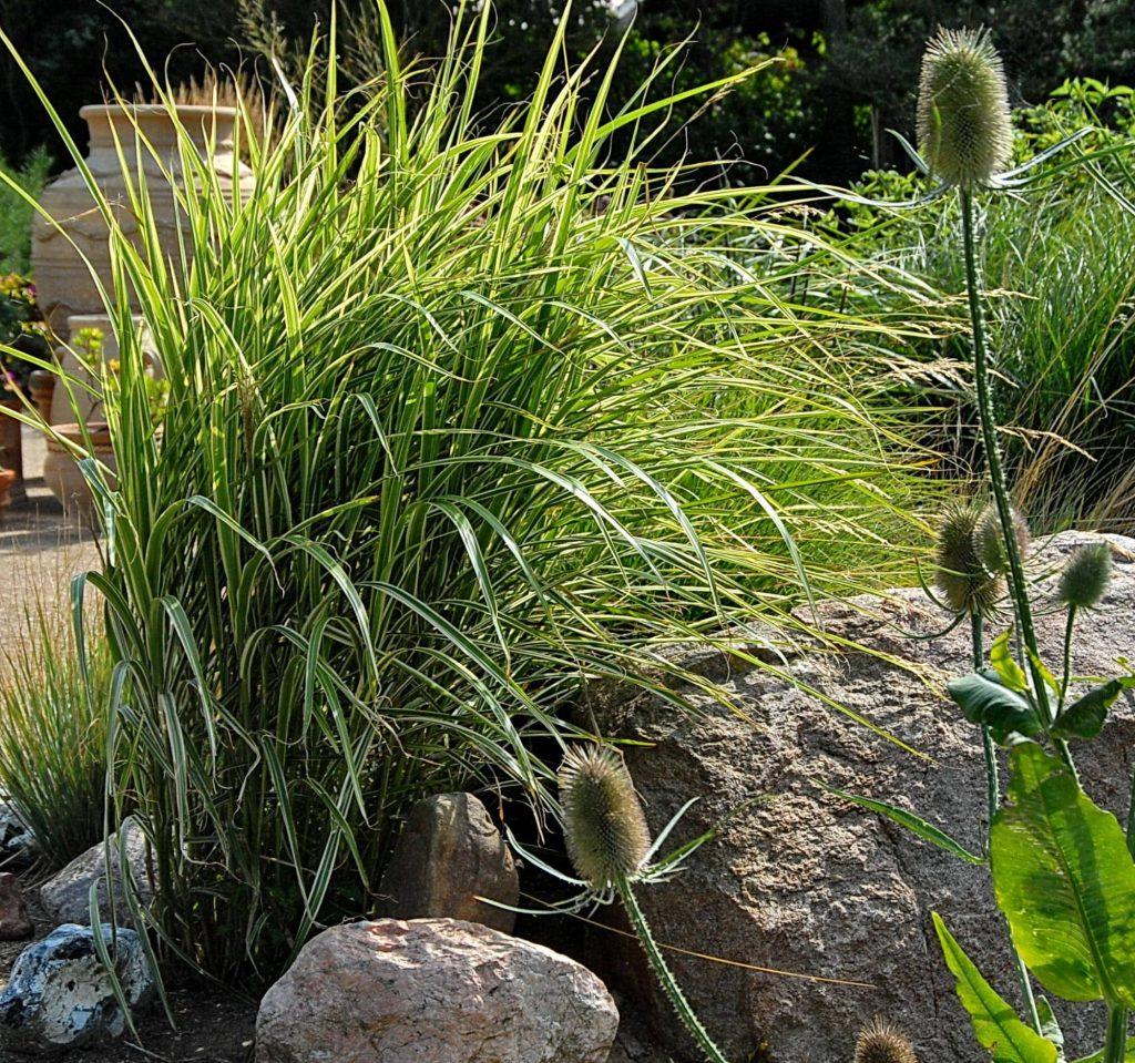 Inspirasjonsbok - Design med græsser av Nina Ewald - prydgress i bed