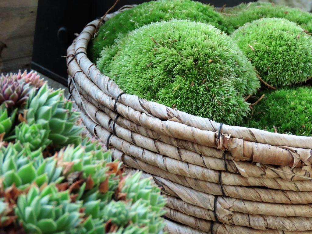 Nærbilde av mose og sukkulenter