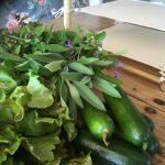 Såkalender for urter og grønnsaker - slangagurk og urter