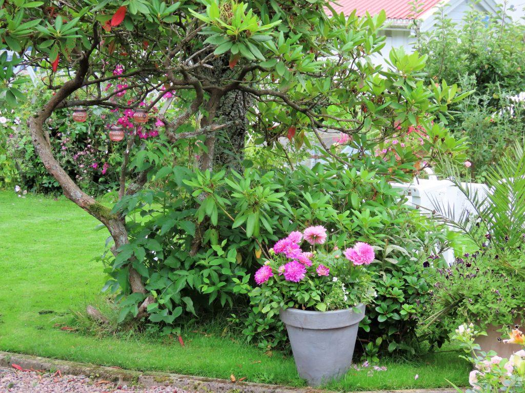 Blomsterikdom i krukker og bed