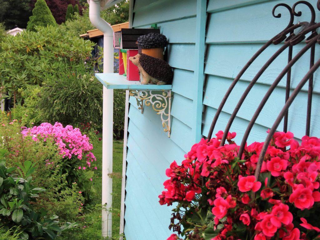 Fargerikt blomstervalg i kolonihagen