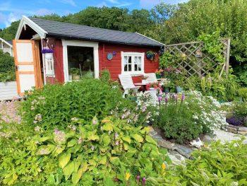 Kolonihager som rekreasjon og hageglede – se mangfoldet - den røde stua til Elianne