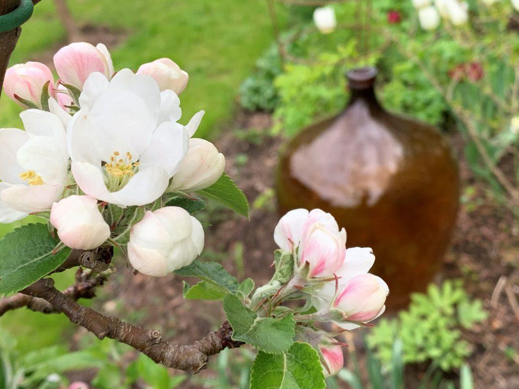 Vår i hagen med blomstring og rislende vannfontene - blomster på epletreet