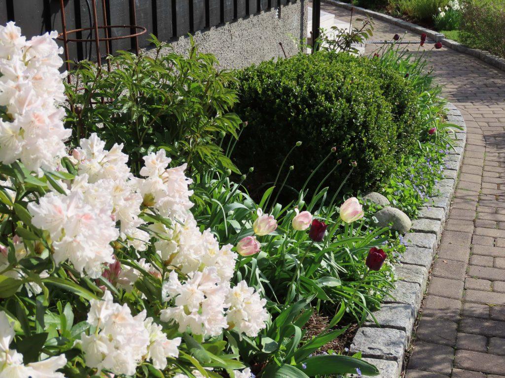 Vår i hagen med blomstring og rislende vannfontene - hele bedet under stuevinduet