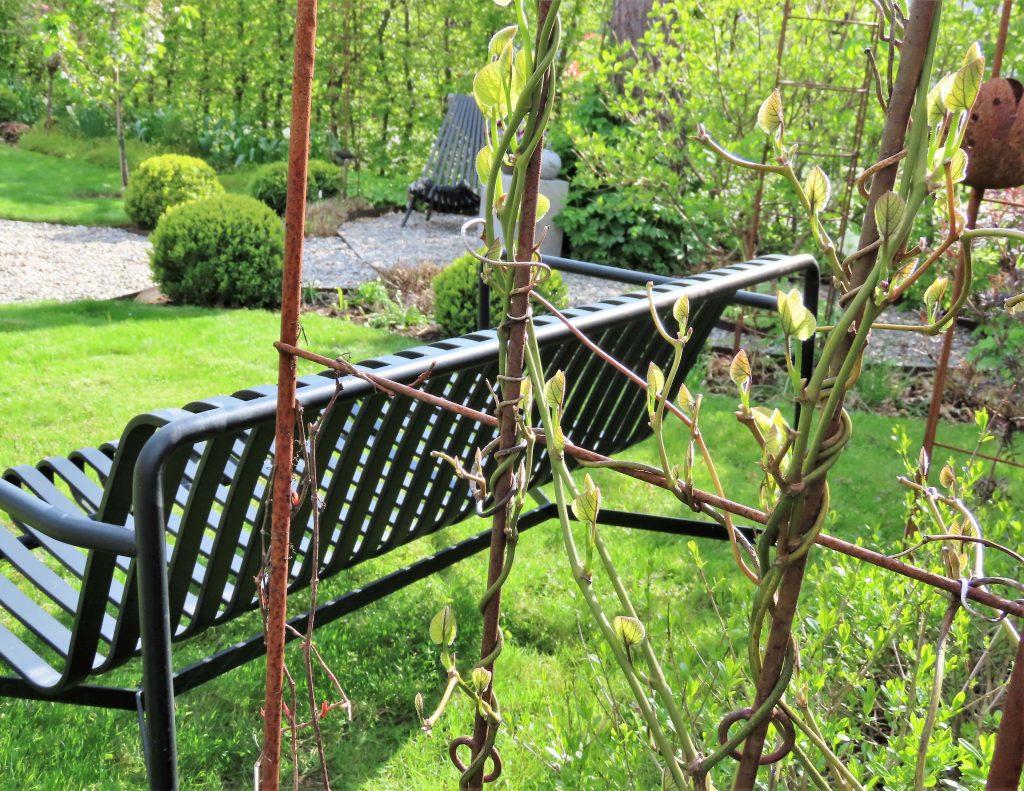 Vår i hagen med blomstring og rislende vannfontene - ved Hay-benken og Pipeholurten