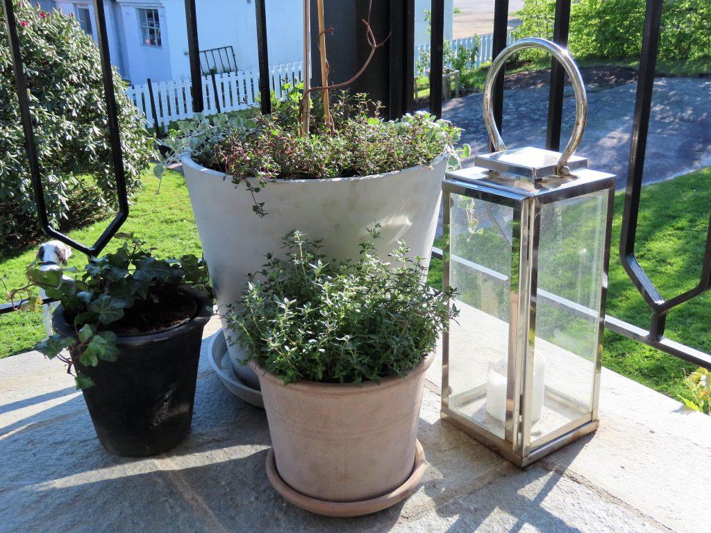 Stilleben av planter på verandagulvet