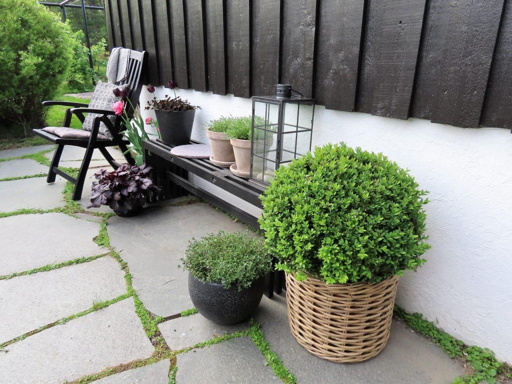 Urbant og landlig med stauder og stillebener - Stilleben på terrassen